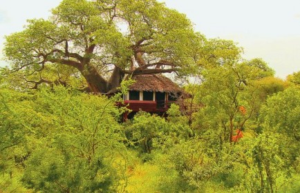 phoca_thumb_l_treetops tree house
