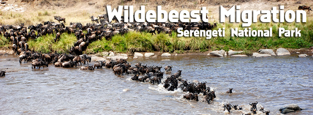 Mount Kilimanjaro facts, Mount Kilimanjaro national park , Aardvark safaris, MT Kilimanjaro facts