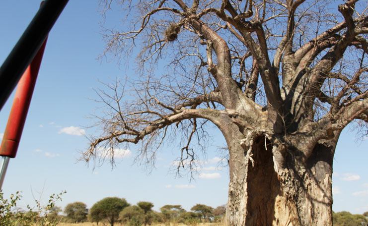 day-trip-tarangire-national-park
