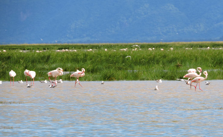 Lake Manyara national park, day tour lake manyara national park