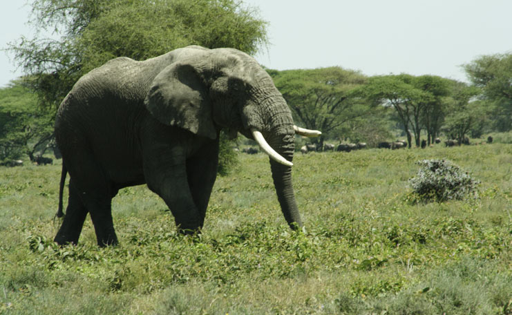 6-days-tanzania-safari